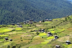 Bhutan, rural area in Haa valley