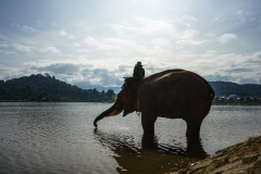 Elephants drinking water from Lak lake in Dak Lak, central highlands of Vietnam
